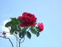 20071114_03